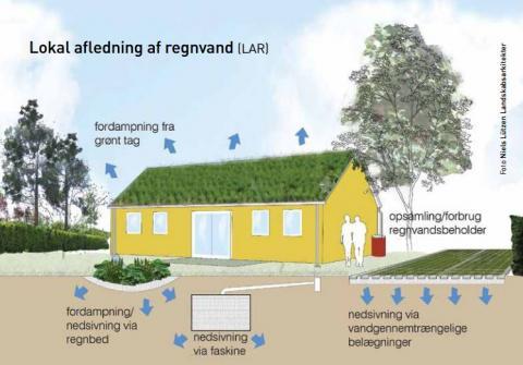 Lokal afledning af regnvand (LAR)